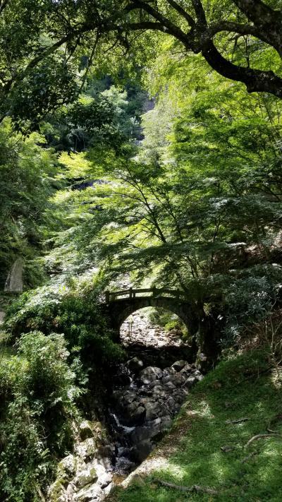 2018年8月 週末はちび犬連れて修善寺温泉へレッツゴー♪@伊豆マリオット修善寺