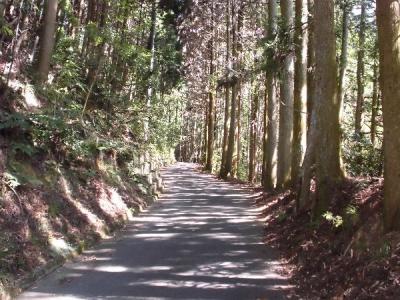 「高槻北部林道コースハイキング」