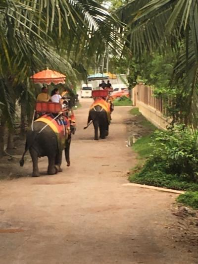 像に乗りたくてバンコクに行ったゾウ、なんて、調子に乗っていたら・・