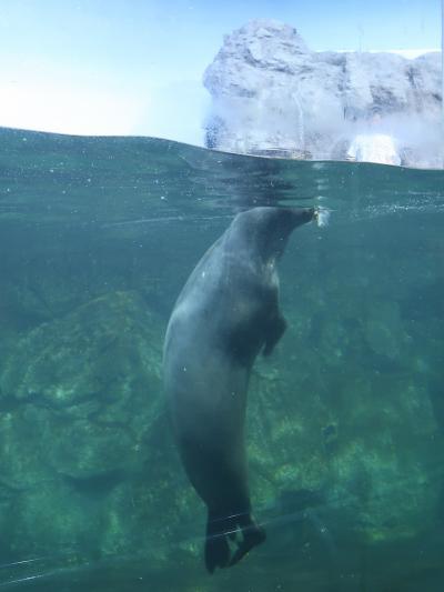 八景島-2 新・シーパラダイス 海で進化した動物たち ☆アシカ・アザラシ・ペンギンも