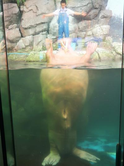 八景島-5 新・シーパラダイス 氷の海にくらす動物たち ☆セイウチ・ホッキョクグマ