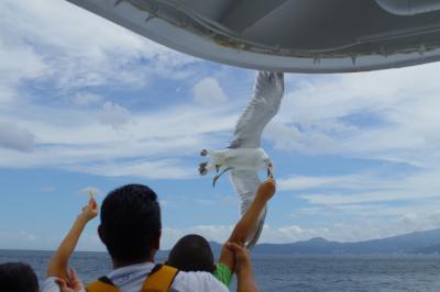 熱海から初島へカモメと共に!
