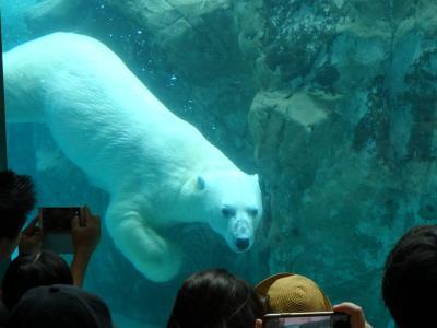 旭山動物園をたっぷり満喫♪旭川ー夏の終わりの北海道旅・1日目