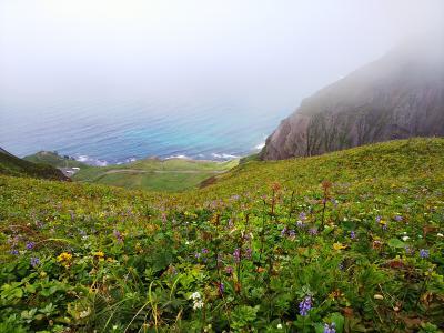 お花畑とウニとアザラシ 礼文島日帰りの旅
