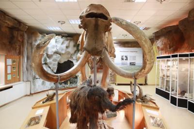 2018年シベリア・サハ共和国ヤクーツクへの旅(13)ヤロスラフスキー北方民族歴史・文化博物館(前編)セミクジラとマンモスの全身骨格から始まって