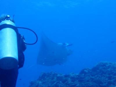 久米島と沖縄本島(8)久米島ダイビング3日目もマンタ、マンタ、マンタのマンタ三昧!