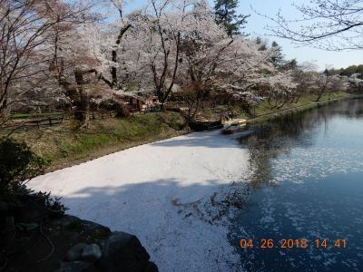 大型客船・ダイヤモンドプリンセス再乗船☆花をもとめて日本周遊➈青森タクシー旅-3