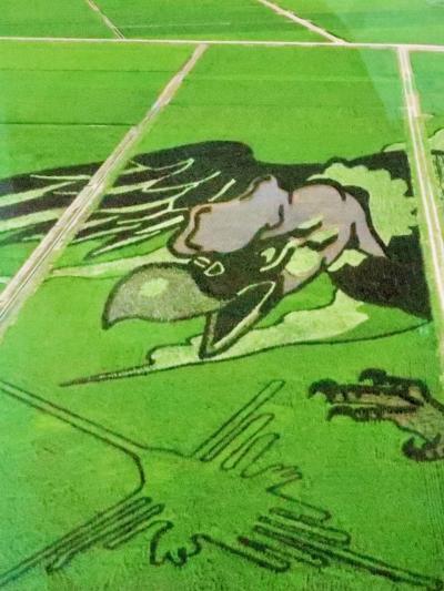 行田2/3 田んぼアート「大いなる翼とナスカの地上絵」☆壮大なスケール・見事な出来映え