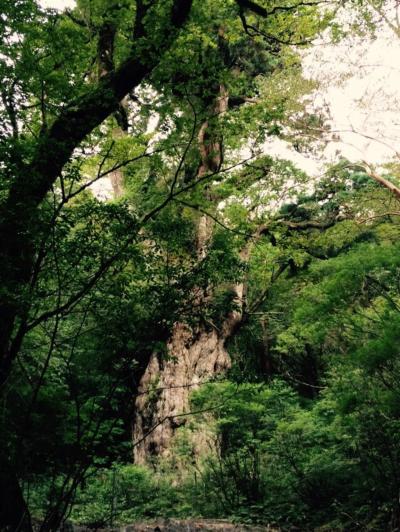 縄文杉を観たい!