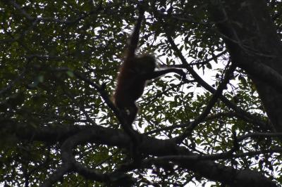 kirin夫妻、森の人に逢いに行く(2)キナバタンガン川ジャングルクルーズ