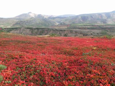 あれー、もう1年経ってしまった。北海道大雪山旭岳へ日本一早い紅葉を求めて!!