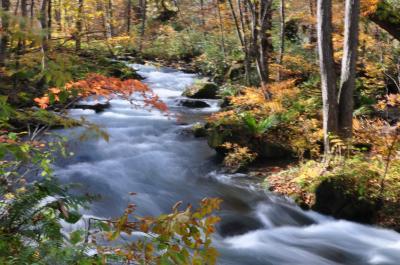 紅葉の奥入瀬渓流、十和田湖、弘前城めぐり