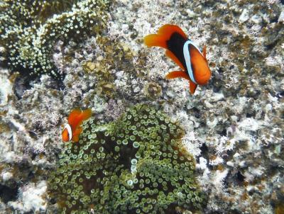 石垣島_Ishigaki Island  八重山列島の中心!美しい自然と利便性を兼ね備えたパラダイス島
