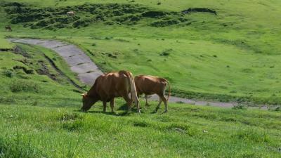 夏のひとり熊本1菊池渓谷と阿蘇ドライブ