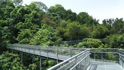 熱帯雨林を空中散歩 サザンリッジス5.4kmを歩く