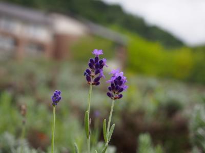 美瑛の丘と大雪山の日本一早い紅葉に温泉、そして富良野フレンチを求めて 2018北海道の旅4