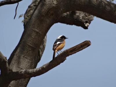 【野鳥と観光の旅】釜山 梵魚寺・大川公園 2018年4月