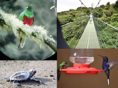 コスタリカを巡る!幻の鳥、蝶、バジリスク、ウミガメの産卵と子亀の誕生、熱帯雨林トレッキング、ボートクルーズ、温泉、様々な生物と自然探訪に、おまけにストバリケード突破までついて、コスタリカの豊かさを満喫 vol①コスタリカ、サンホセ到着