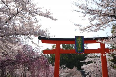 ひとりお花見部 2011.4 平安神宮~法金剛寺~平野神社など。