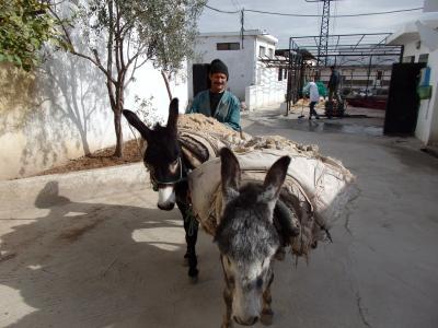 モロッコの旅 3日目(1)