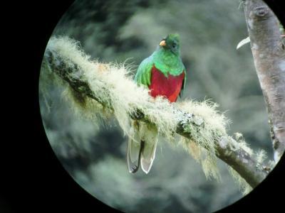 コスタリカを巡る!幻の鳥、蝶、バジリスク、ウミガメの産卵と子亀の誕生、熱帯雨林トレッキング、ボートクルーズ、温泉、様々な生物と自然探訪に、おまけにストバリケード突破までついて、コスタリカの豊かさを満喫 vol⑨朝5時出発でケツァールを探しに、コーヒー農園も