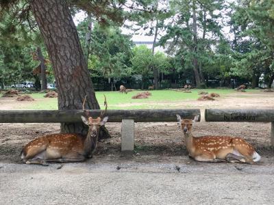 晩夏の奈良・10,000円で日帰り定番観光