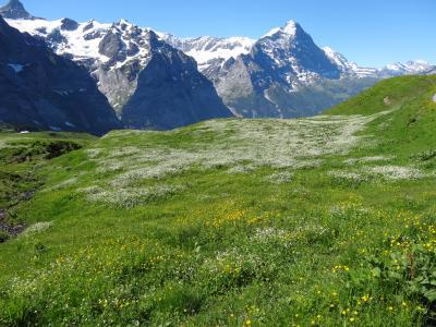 スイスパス8日間の旅(6)グリンデルワルトでのんびりハイキング