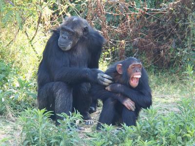 勤続記念休暇でアフリカへ(出国、ナイロビ、スウィートウォーター動物保護区)