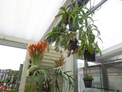 久しぶりに西武百貨店9階の食と緑の空中庭園を訪問しました②日比谷花壇を訪問