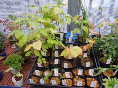 久しぶりに西武百貨店9階の食と緑の空中庭園を訪問しました③誠香園を訪問