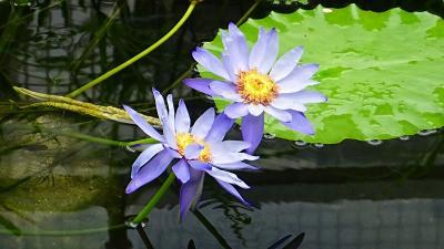 花博記念公園鶴見緑地 その2 咲くやこの花館見学 1。