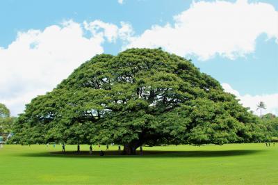 ハワイで神社めぐり&JALホノルル空港新規オープン「ハレラウンジ」