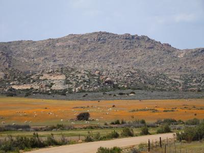 2週間南部アフリカ旅行*その3*ナマクワランド