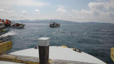 九十九島とイルカ・ウオッチングがメイン:長崎2泊3日のツアー