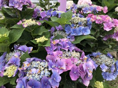 高知・紫陽花と歴史に触れる旅