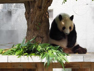 姫路城、六甲山、王子動物園をめぐる欲張り旅です