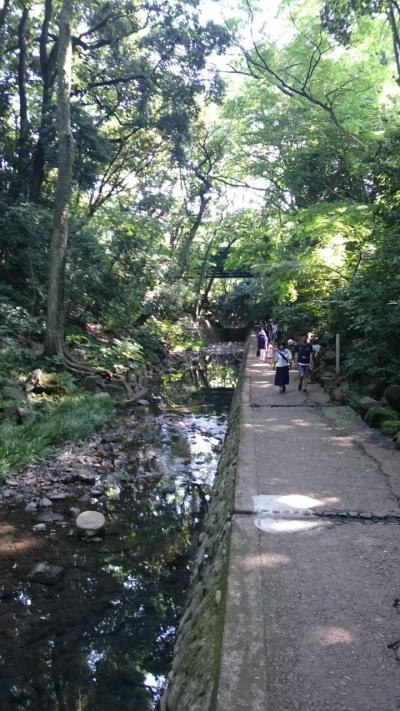 【東京を歩こう!】等々力渓谷へ涼みにいった、森林浴でリフレッシュ