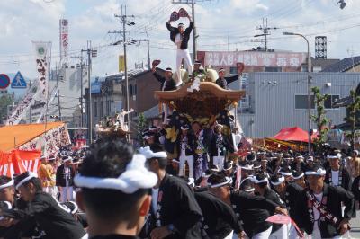 渥美半島の田原祭りから岸和田のだんぢり祭りと高野山の旅(二日目)~怖いもの見たさのだんぢり祭。疾走する男たちの大集団は海潮のような迫力です~