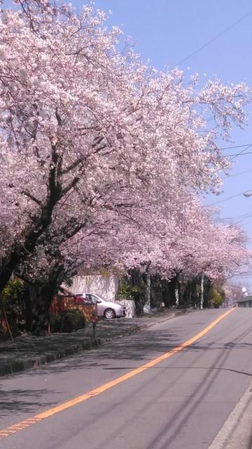 桜散歩IN鎌倉山&スイーツIN鎌倉山