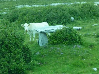 アイルランドで夏休み 6 妖精が息づく砦、ドルメン、十字架の町・・・石・石・石! in バレン高原