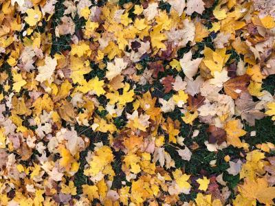 2018年 Autumn ルーツを辿る Finally Tour ~  驚異!38,000歩 ヘルシンキ ハーフマラソンショッピング  編 *4