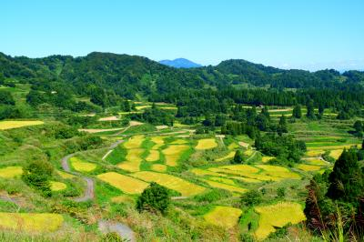 観タクンで巡る十日町の棚田!新潟旅行その1