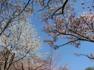 最後の仕上げは日本で 広島花めぐり