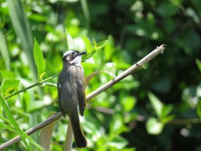 【野鳥と観光の旅】沖縄・那覇 2018年3月