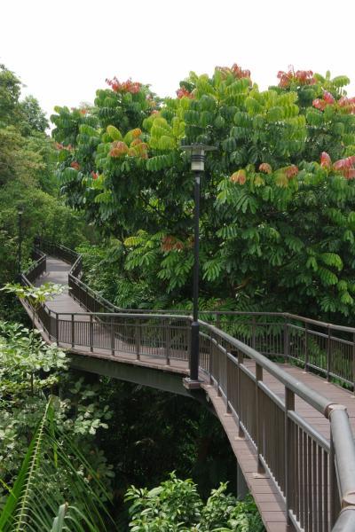 シンガポール旅行2018 2-2 サザンリッジ散策 ケントリッジパークまで完遂