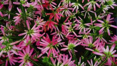 宝塚市の街歩き アイアイパークへ花を見に出かけました 下巻。