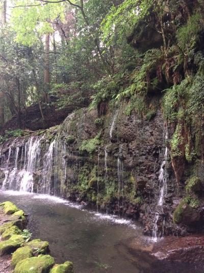 箱根・湯坂路、湿生花園・石垣山をぶらり