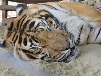ネピドー動物園