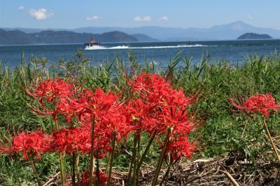 近江路を行く 湖西の素敵な彼岸花ロード、高島の風車村&メタセコイア♪