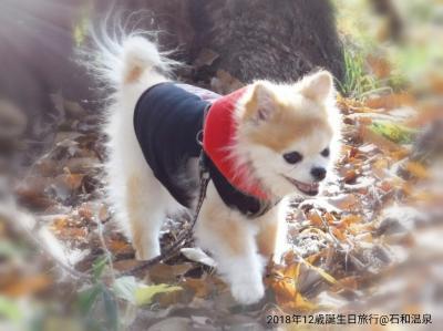 ◆犬旅◆ 山梨/石和【かんぽの宿 石和温泉】~祝12歳の誕生日&車椅子でも安心バリアフリー旅~週末2日間(2018.12)